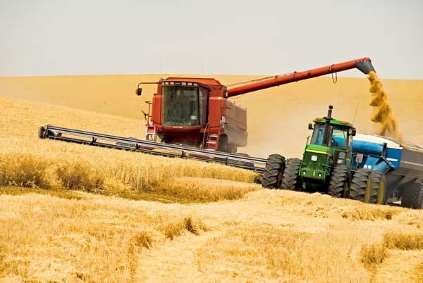 Врожайність озимої пшениці з 1 га