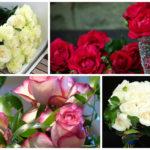 Як зберегти зрізані троянди у вазі якомога довше: кращі способи