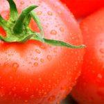 Як виростити великі помідори: корисні поради