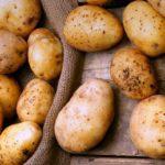 Яку краще посадити картоплю?