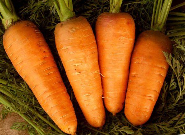 Морква: посадка і догляд у відкритому грунті