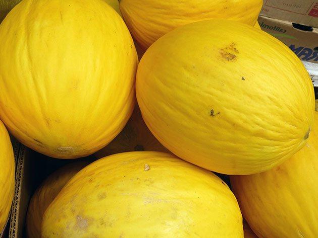 Диня - вирощування розсади з насіння