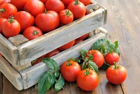 Які сорти томатів найбільш врожайні?