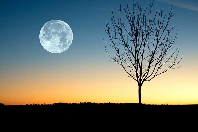 Місячний посівний календар