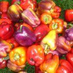 Солодкий перець: вирощування і догляд