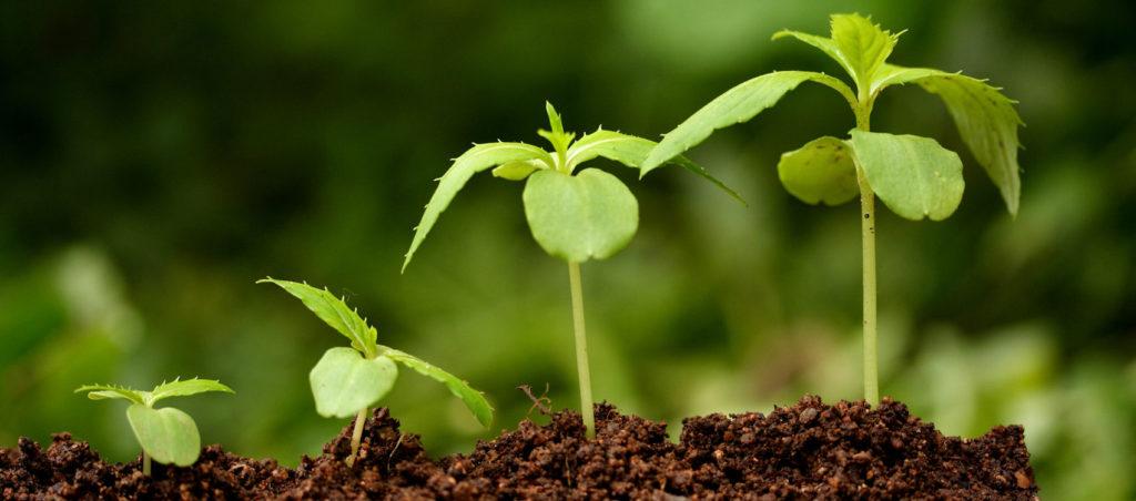 Види стимуляторів росту рослин