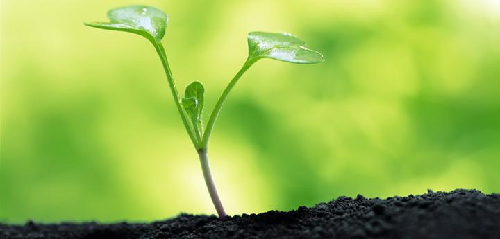 Дія стимулятора росту рослини