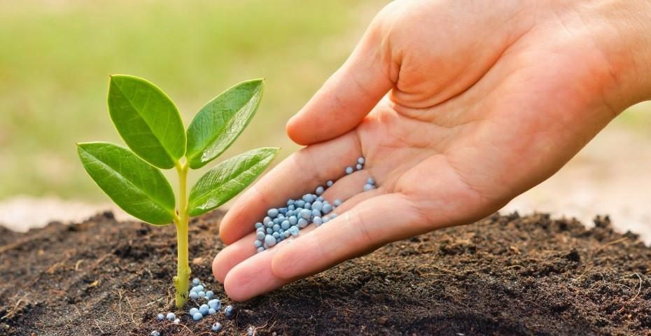 Навіщо потрібні стимулятори росту