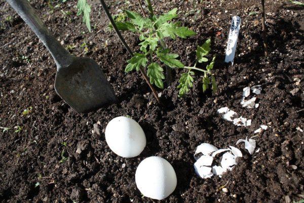 Яєчна скарлупа для городніх культур
