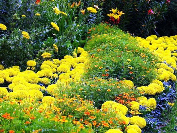 Жовті і оранжеві відтінки суцвіть