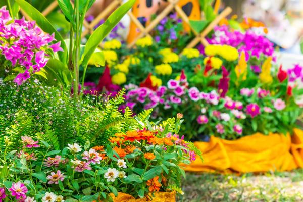 Які квіти ростуть на клумбі
