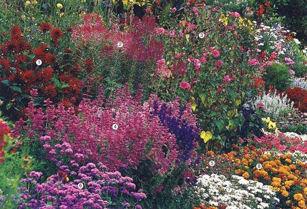 Літній квітковий оазис