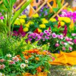 Які квіти ростуть на клумбі – огляд рослин з фото