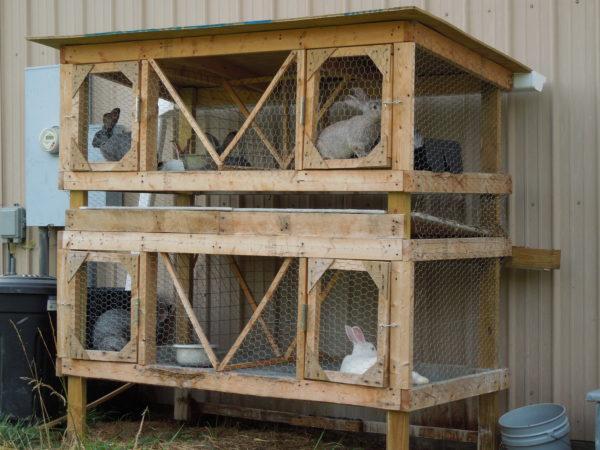Алгоритм зведення житла для кроля