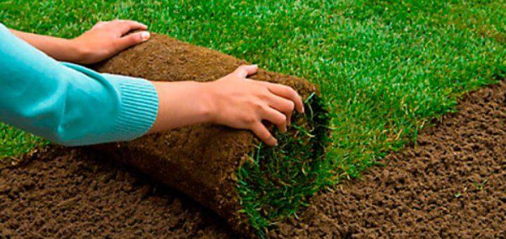 Як виростити гарний густий газон?