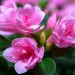 Добрива для кімнатних квітів – щоб вони вас радували!