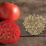 Як правильно зібрати і зберегти насіння томатів в домашніх умовах