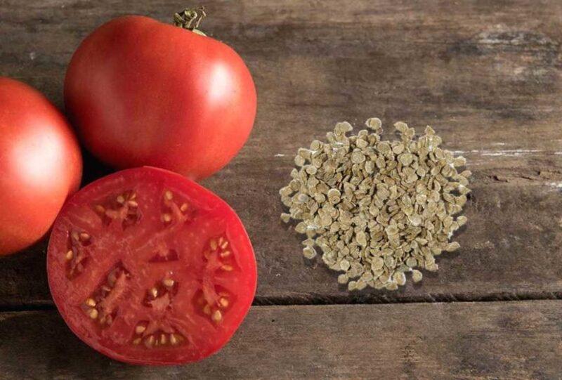 Як правильно зібрати і зберегти насіння томатів