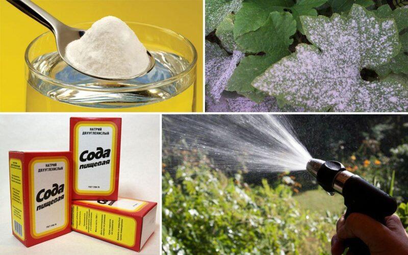 Як обробити содою від борошнистої роси?