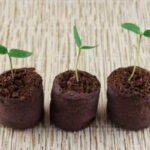 Розсада солодкого перцю в торф'яних таблетках: правила посадки, догляду, пікіровки