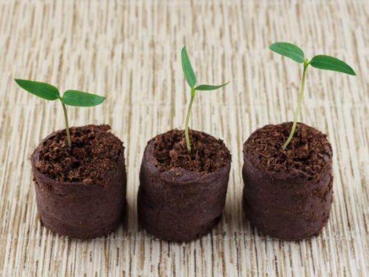 Вирощування розсади перцю в торф'яних таблетках
