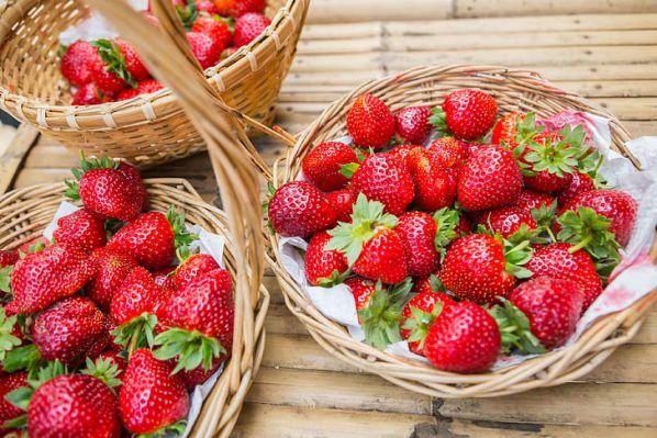 Як і чим обробити полуницю від хвороб і шкідників навесні?