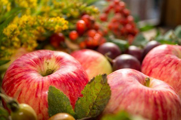 Особливості підживлення молодої і дорослої (старої) яблуні