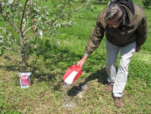 Підживлення яблуні навесні і влітку