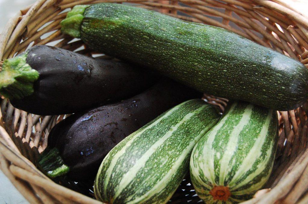 Все про вирощування кабачків від посіву до збору врожаю