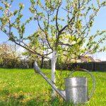 Як правильно поливати яблуню та інші плодові дерева навесні, влітку і восени: скільки води потрібно для поливу?