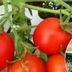 Підживлення томатів дріжджами: коли і як поливати дріжджовим розчином для солодощі плодів?