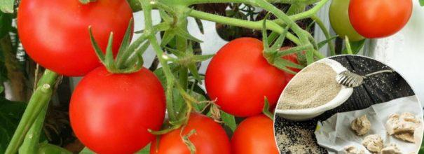Підживлення томатів дріжджами