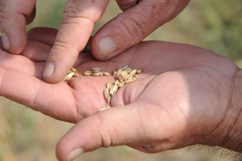 Чому не сходить насіння: огляд причин