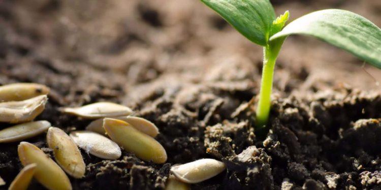 Не сходить насіння: що робити і чому це може відбуватися?