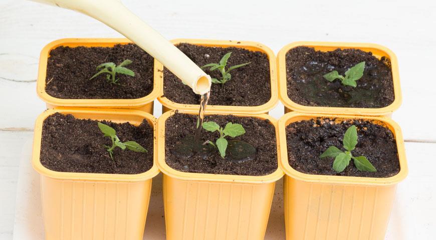 Неправильний догляд за насінням