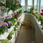 Квіти на балконі: як і де посадити?