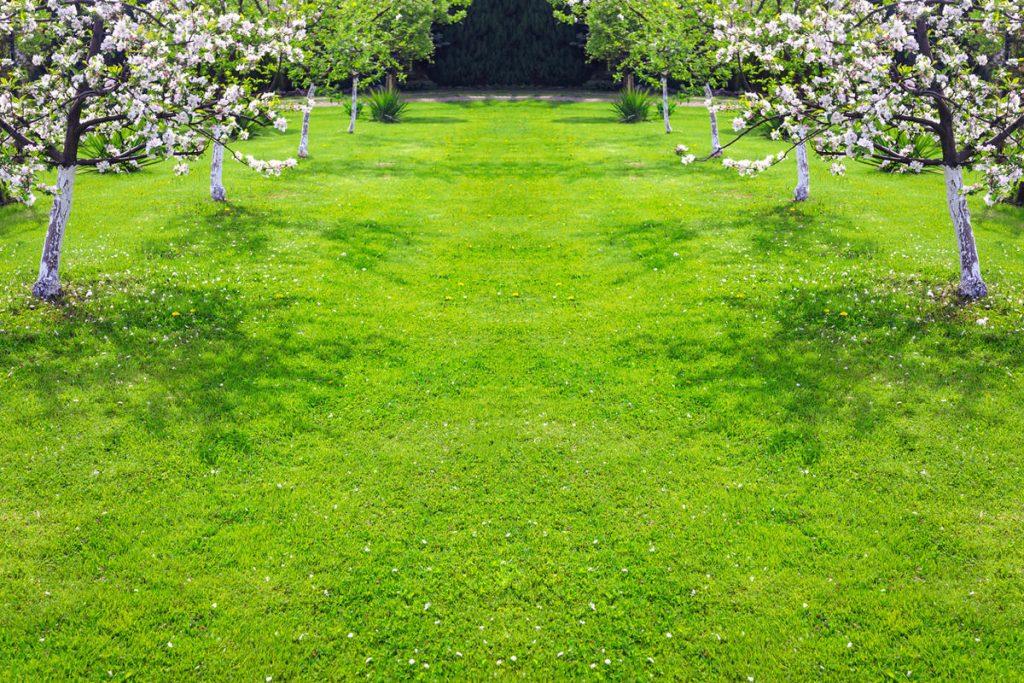 Оформлення пристовбурних кіл дерев: як зробити правильно?