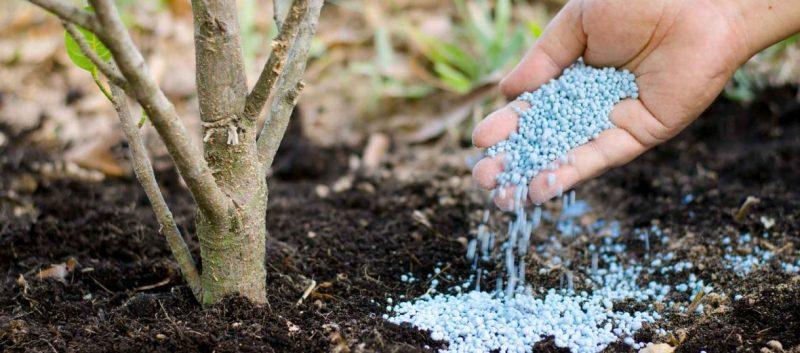Як і чим правильно удобрювати садові дерева?