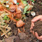 Готуємо біогумус з харчових відходів в домашніх умовах