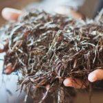 Рецепти приготування компосту для вирощування шампіньйонів в домашніх умовах