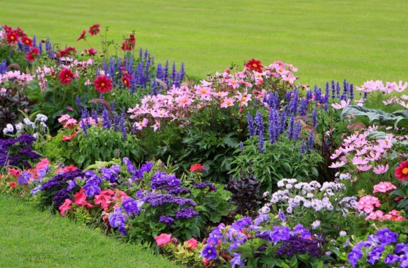Які гарні квіти можна сміливо посіяти під зиму?