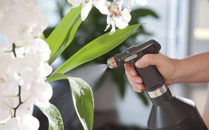 Як правильно розводити бурштинову кислоту для квітів?